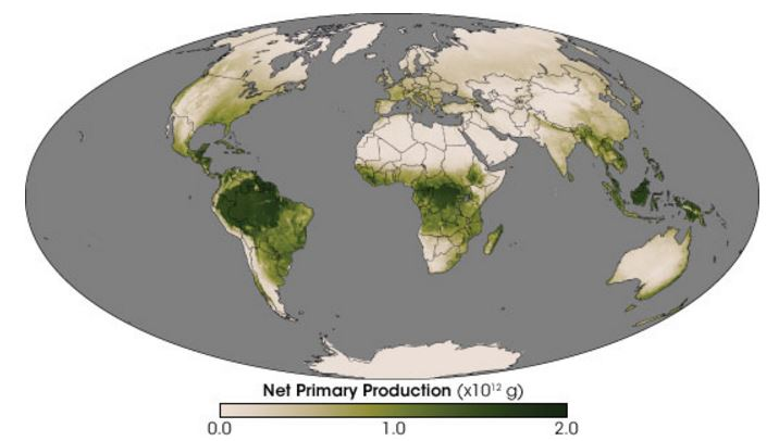 Net pimary production